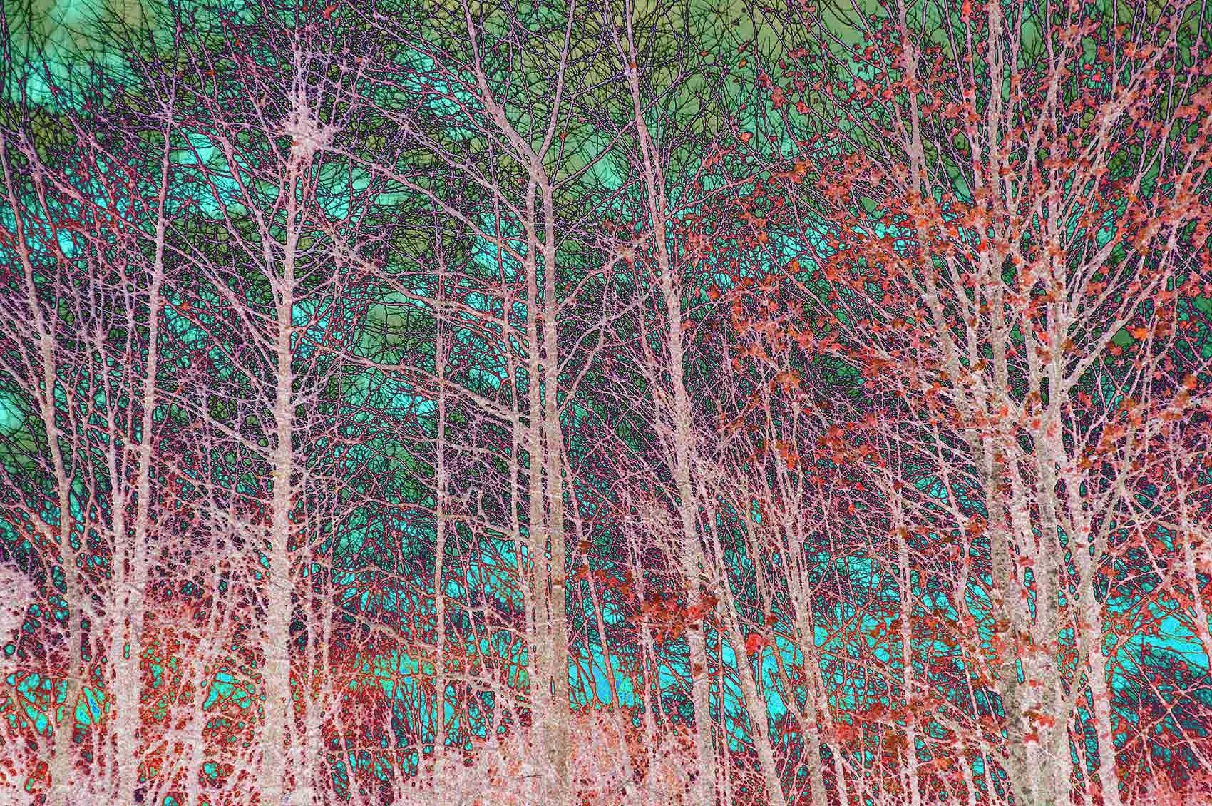 09-MultiColoredBirches